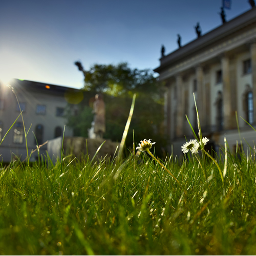 Closeup of grass and sun