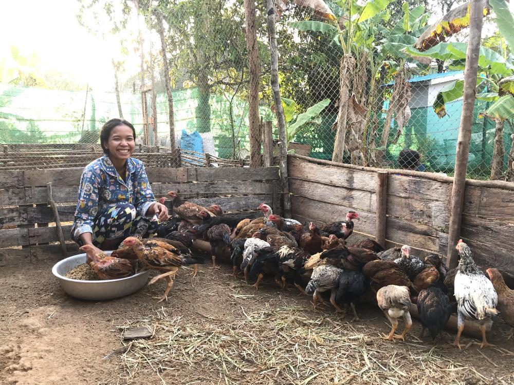 Philippines_summer_chickens